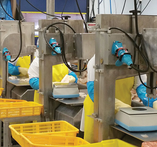 Meltric plugs and receptacles mounted to individual work stations in a seafood processing operation