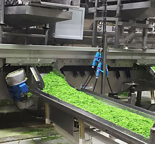 Vegetable processing plant with conveyor connections